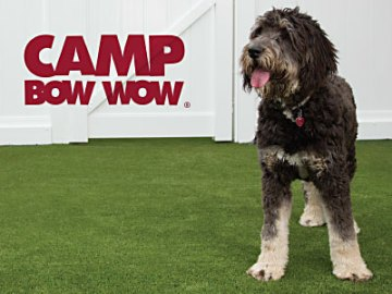 Camp Bow Wow Now in Loveland, CO