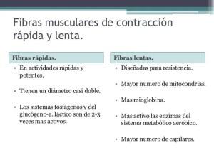 nutrientes-utilizados-durante-la-actividad-muscular-4-638