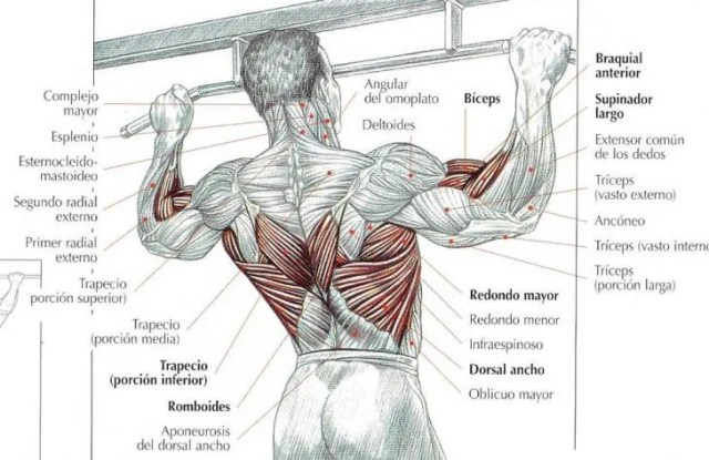 trabajar la espalda sin pesas