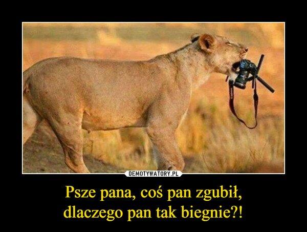 Szukam fotografa który ...