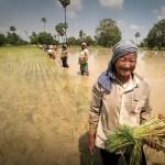 BioChica's 500 Words   GMOs: why do I care and why do I blog?