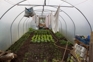 Winter 2015/6- the bench at the back is where I sow seeds