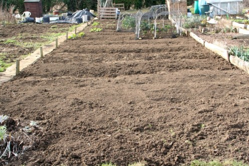 The plot ready for the mulch