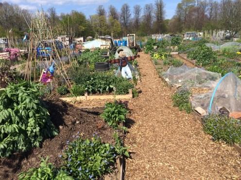 Hugelkulturs and scarecrows