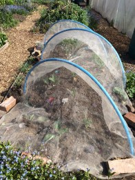 recycled cloches