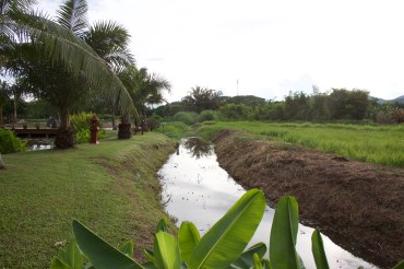 The khlong separates the garden from the rice field and is used to irrigate both