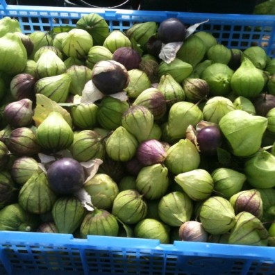 Last year's harvest of purple and green tomatillo