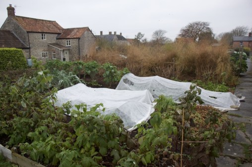 mostly perennials here, with some annual crops under the fleece