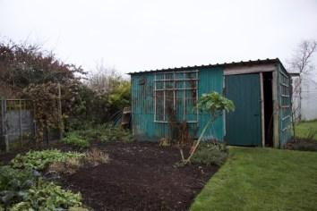 metal shed and organic no dig beds