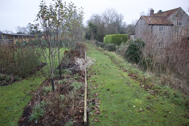 a line of fruit trees, wild area to the right
