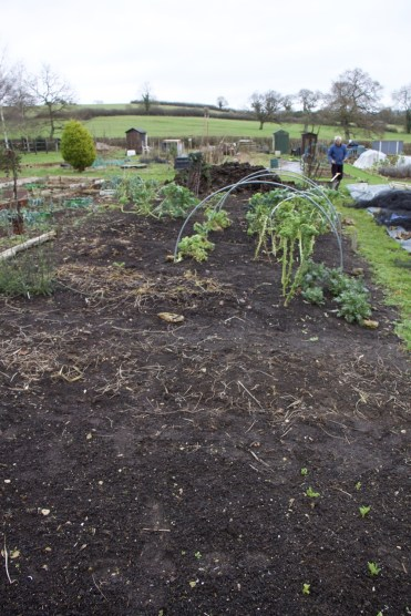 Before the mulch