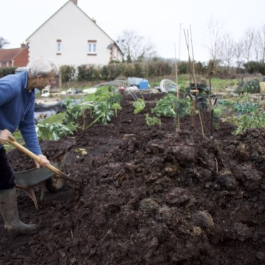 Mulching the plot