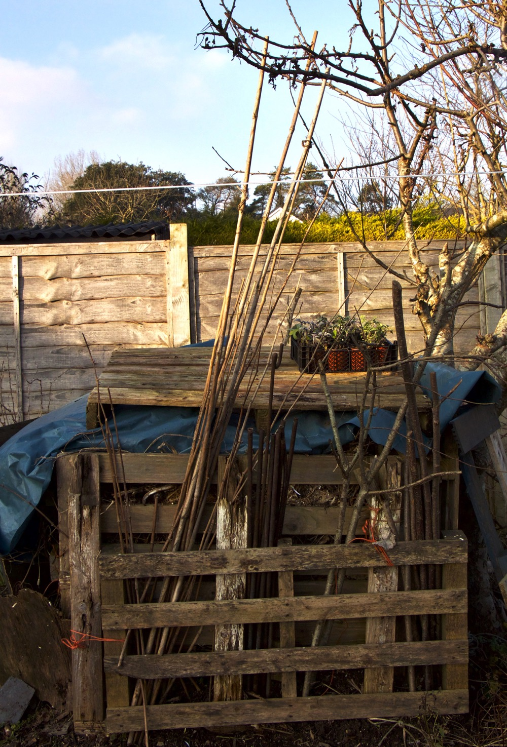 Pallet compost heap covered with recylced polythene to keep heat in (it is January) with a pallet on top in readiness for spring plants and storage area made from another pallet, for plant supports, canes, etc