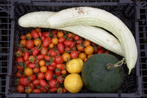 Tortarello, watermelon and tomatoes