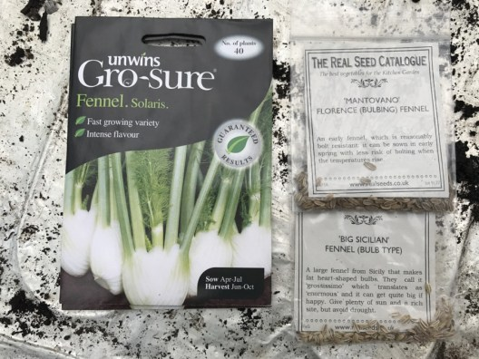 three kinds of Florence fennel