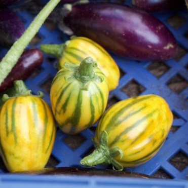 ripe yellow aubergines