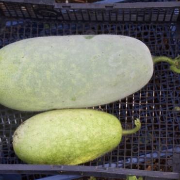 5 desserts melons