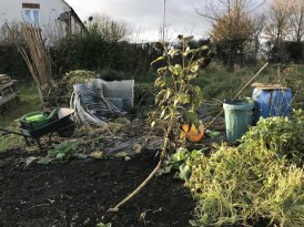 view up the allotment towards the sheet of polythene