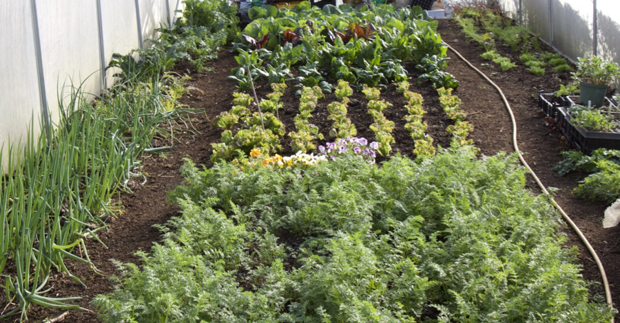 Top 10 FAQ – How to start your No Dig Garden