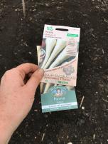 the parsnips I sowed