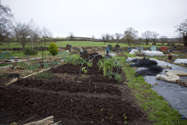 the mulched beds
