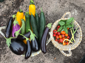 Harvests from the polytunnel July 20th
