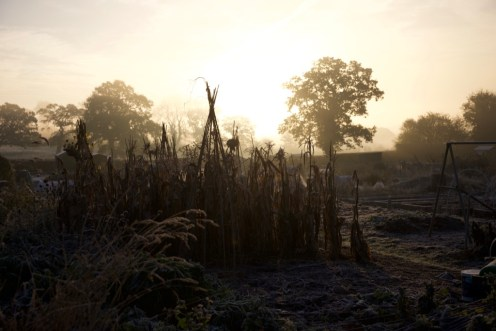 allotment sunrise