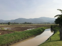 Rice fields and klong- a small canal for irrigation