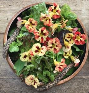 salad leaves with nasturtiums