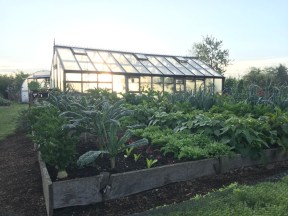 No dig/Dig experiments - some of the few beds with wooden sides - greenhouse behind