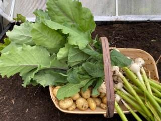 June harvests