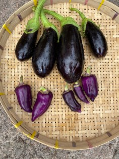 Oda purple sweet peppers and aubergines