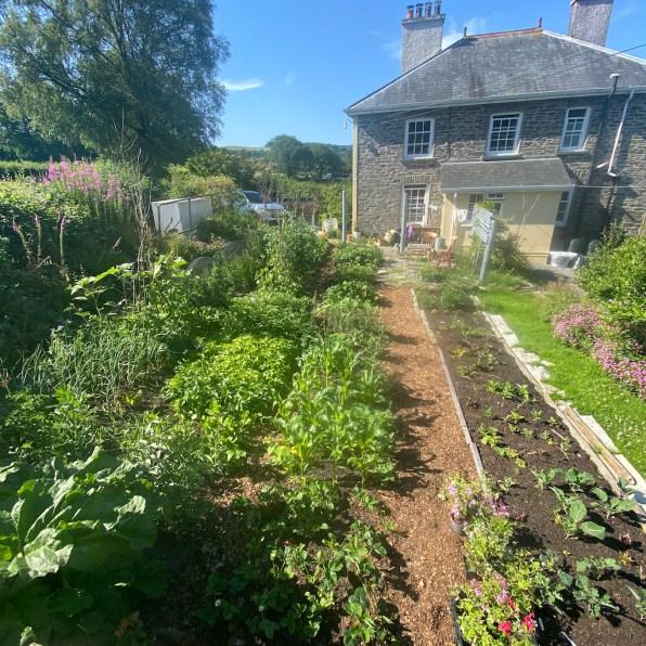 Back garden, 18th July