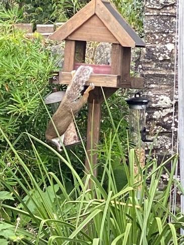 squirrel enjoying bird seed