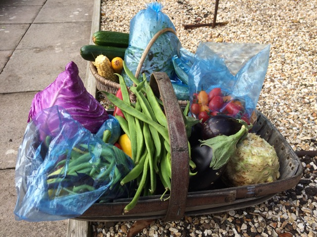 some of my vegetables, Summer 2015