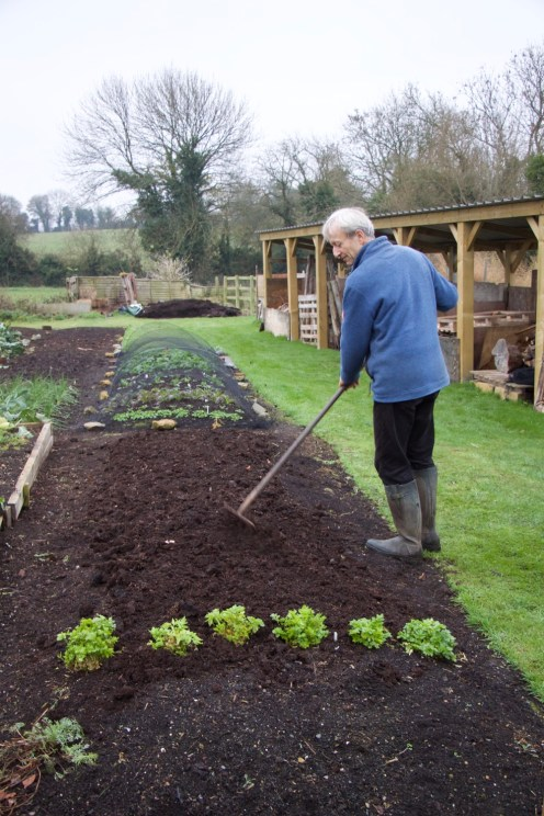 Charles raking the compost to break up any big lumps