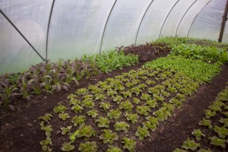 inside the polytunnel