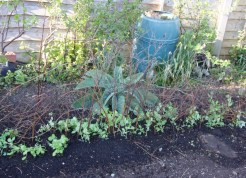 short twigs added for the peas