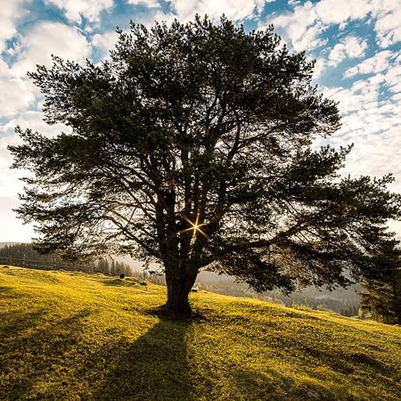 Curso Educación Ambiental: Pensemos en el medio ambiente