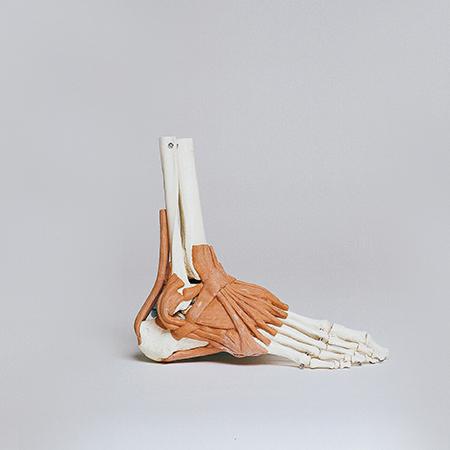 Unidad de Aprendizaje Anatomía y fisiología II