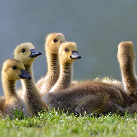 Unidad de Aprendizaje Reproducción animal