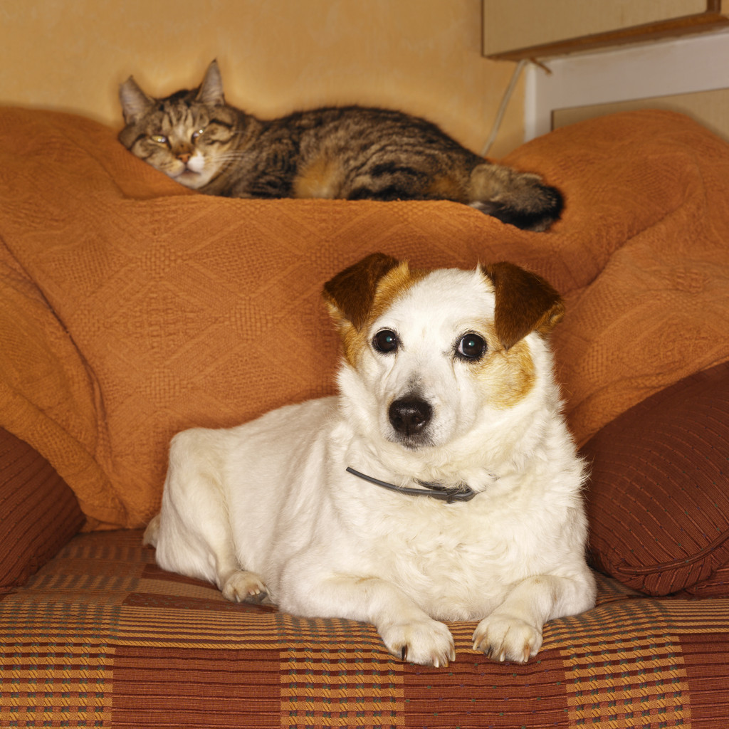 best sofa for cats owners batting cushions do you know the state of your pets health banfield does