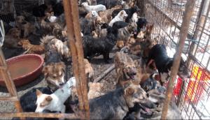 Yulin Slaughterhouse