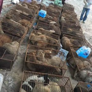 End Yulin Dog Meat Festival