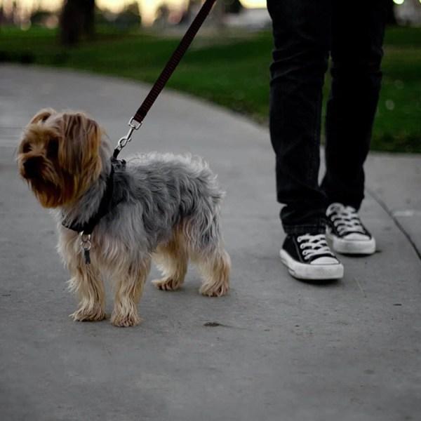 Dog Car Seatbelt Set (2pcs)