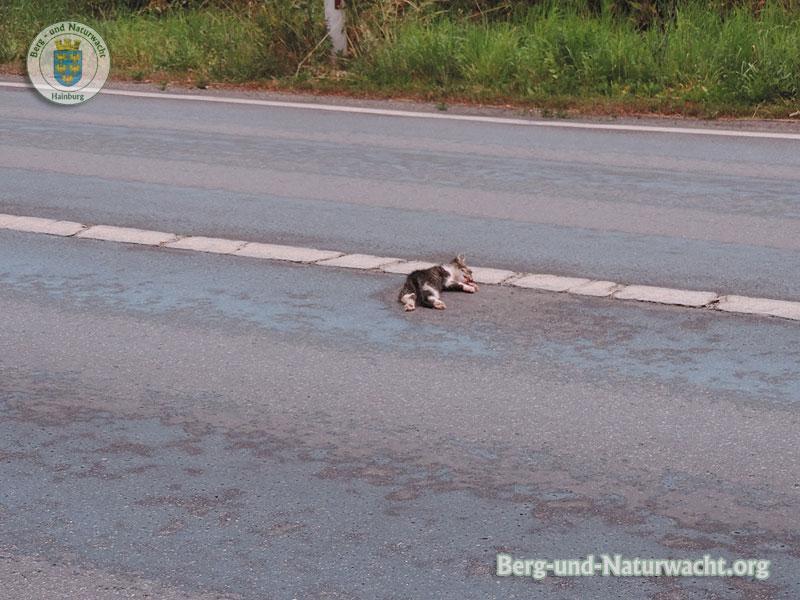 Junges Verkehrsopfer geborgen