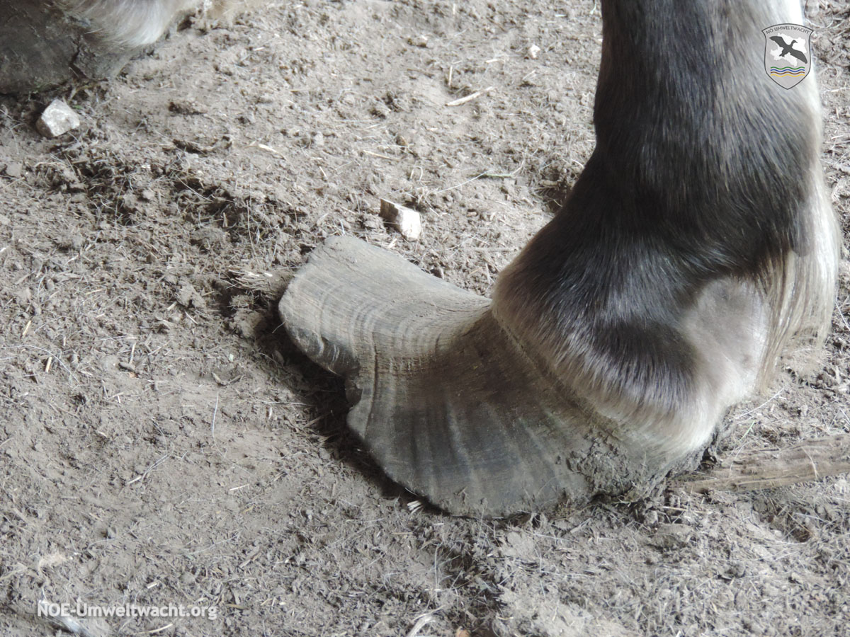 Meldung wegen Verdacht der Tierquälerei bei Pferden