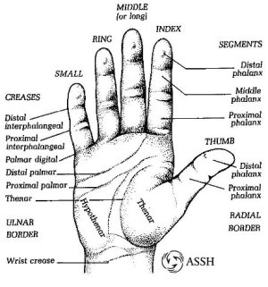 Hand Surface Anatomy – Language of Hand and Arm Surgery Series