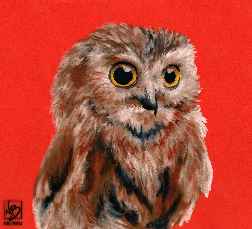 owl, owls, small, orange, full body, full-body, face, close-up, close up, bird, birds, colored pencil, colored pencils, coloured pencil, coloured pencils, pencil crayon, pencil crayons, realism, realistic, animal, animals, wildlife, nature, noelle, noelle brooks, noellebrooks, noelle m brooks, noellembrooks, art, series, drawing, drawings, picture, pictures, illustration, illustrations, portrait