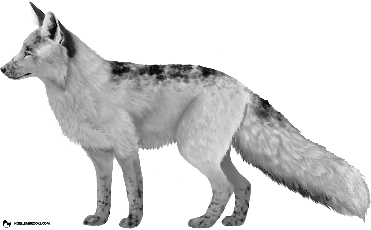 Georgian White-Colored Red Fox